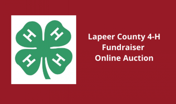 Auction Listings(381)